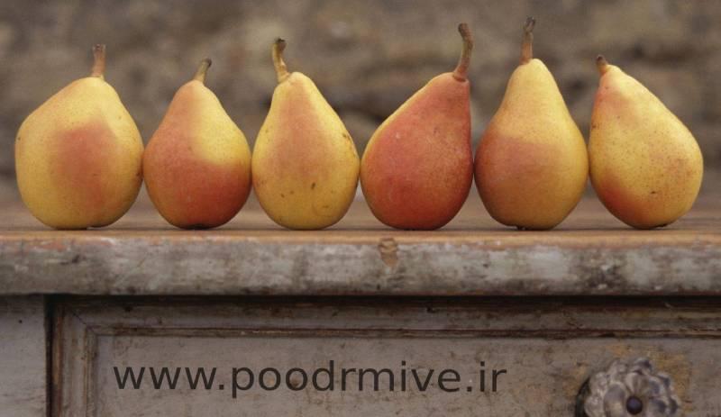 صادرات پودر گلابی خشک اعلا به بازار