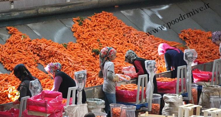 تولید کنندگان و مصرف کنندگان پودر هویج مرغوب