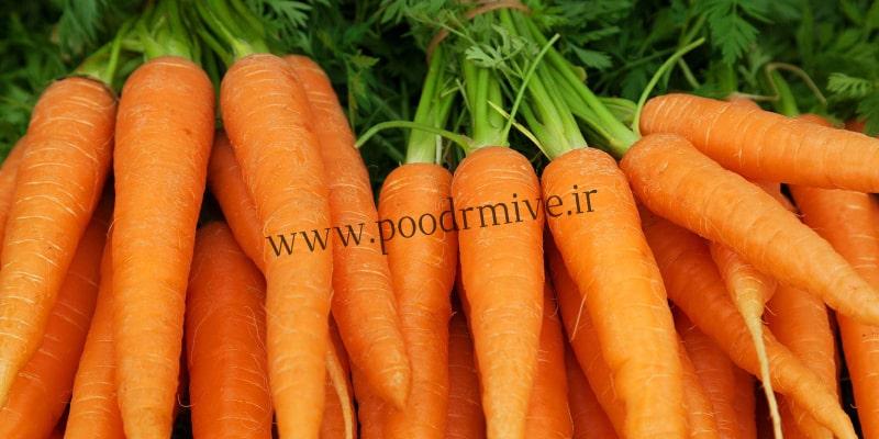 بازار فروش عمده پودر هویج